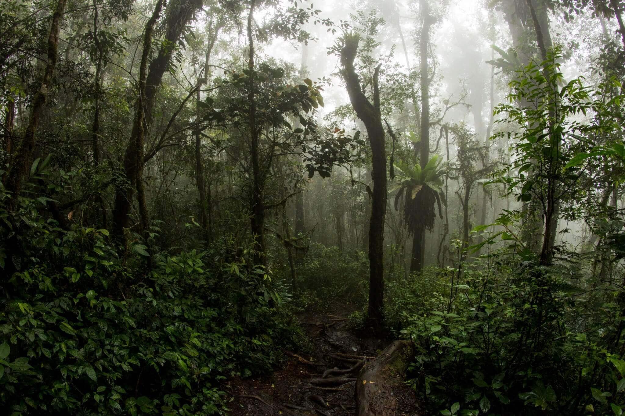 Mt. Tujuh Cloud Forest, Kerinci, Jambi, Sumatra, Indonesia