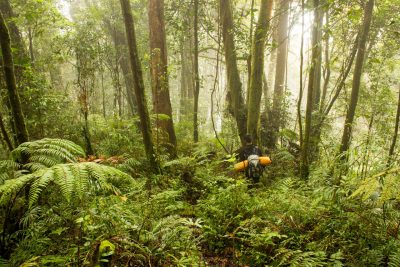 Trekking through Mt Kunyit Cloud Forest, Responsible Travel, Ecotourism, Sustainable Travel, Kerinci, Jambi, Sumatra, Indonesia
