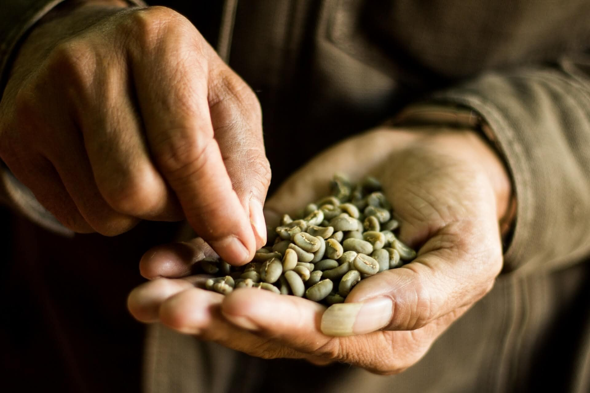 Green Arabica Coffee in a farmer's hand, Kerinci, Jambi, Sumatra, Indonesia