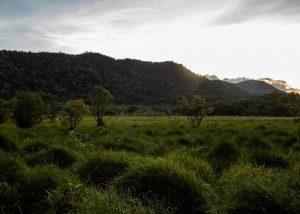 Ladeh Panjang Marshland Wetlands, Kerinci, Jambi, Sumatra, Indonesia