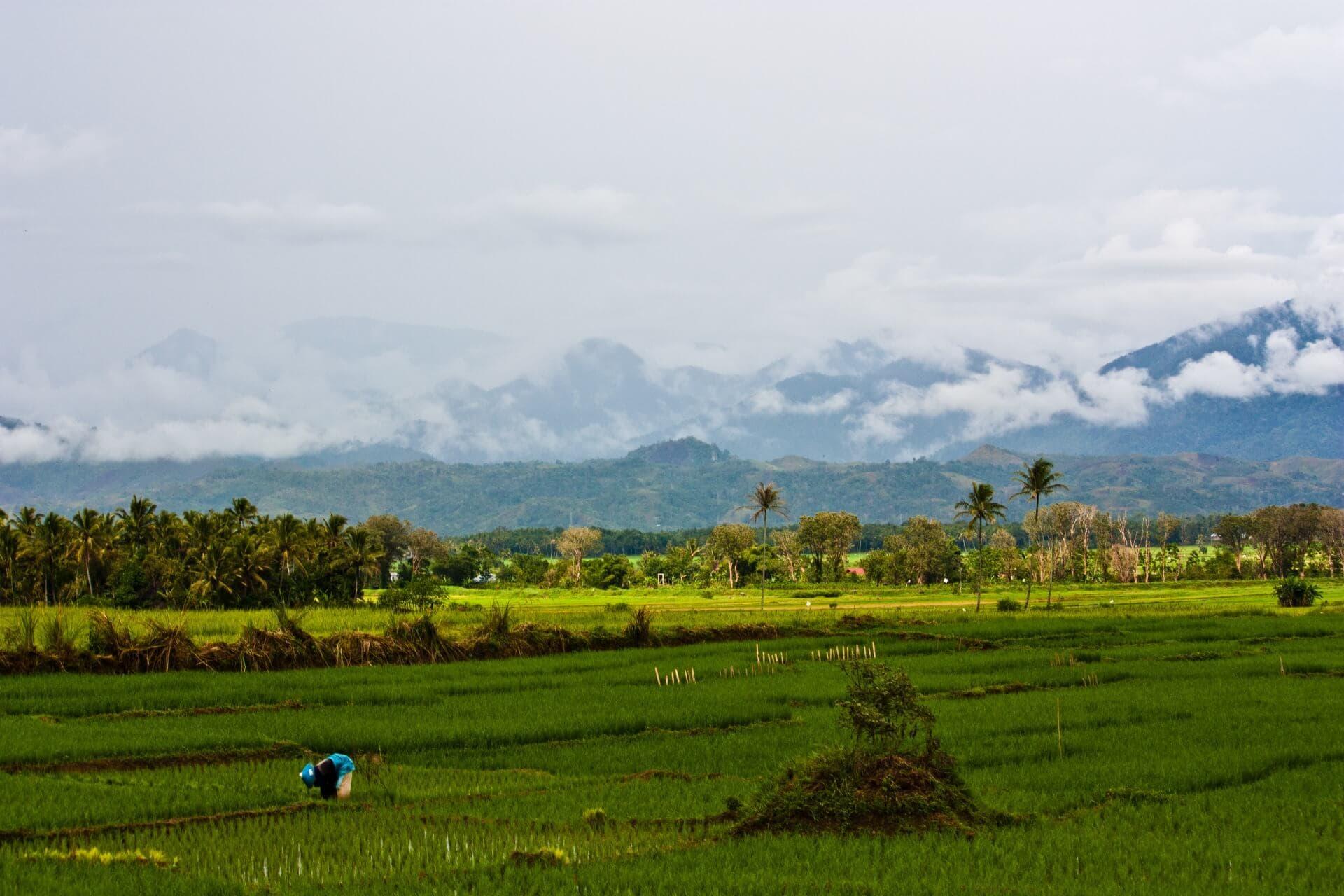 Rice Farmer in the Kerinci Valley, Jambi, Sumatra, Indonesia
