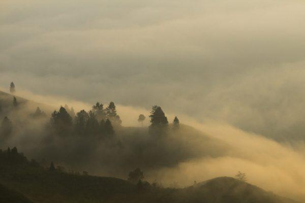 Misty Morning on Bukit Khayangan, Sungaipenuh, Kerinci, Jambi, Sumatra, Indonesia