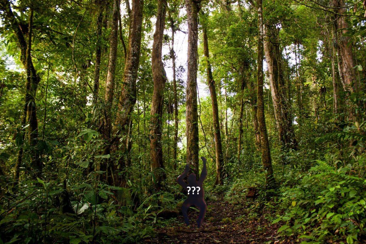 The Mysterious Orang Pendek Cryptid, cryptozoology, Kerinci, Sumatra, Jambi, Indonesia