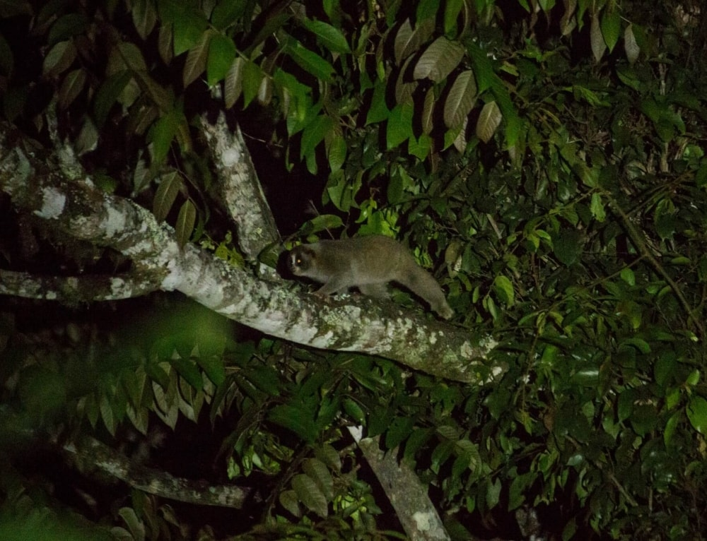 Night Safari on Bukit Tapan